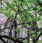 Blick auf Klostermauer mit Bäumen davor; Quelle: pixabay.com